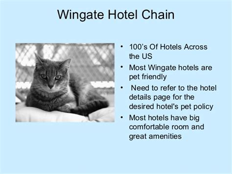 hotel chains that allow dogs best pet friendly hotels chains in the usa that welcome your pet