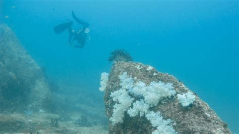 dive koh lipe the best dive site in koh lipe stonehenge getting sted