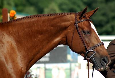 mane/tail styles for 4 h horse showmanship? | yahoo answers