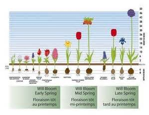 Bulb Garden Layout Gardening Guide Selecting Garden Bulbs For Your Climate Zone