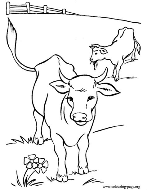coloring pages of cow and calf cows and calves cows in the pasture coloring page