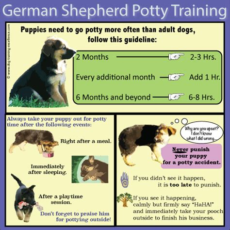 dog training house training german shepherd puppy training guide