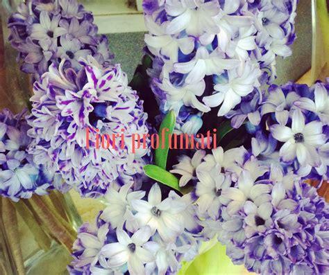 fiori profumati fiori profumati idee fiorite