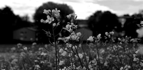 imagenes blanco y negro facebook primavera en blanco y negro imagen foto plantas