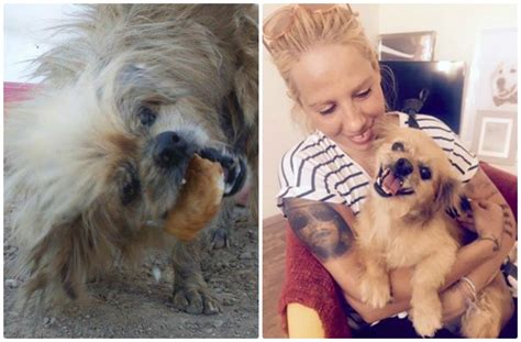 Matted Rescue by New For Abandoned Matted In His Forever Home