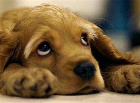 imagenes tiernas de perritos perritos perros monos