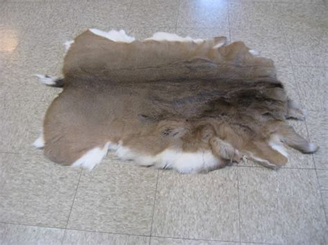 Tanned Hides For Sale Tanned Deer Hides For Sale Www F F Info 2017