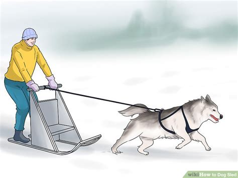 how to sled dogs how to sled 12 steps with pictures wikihow