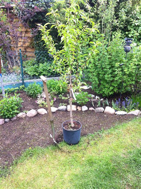 kleingarten ideen pfirsichbaum pflanzen kleingarten ideen