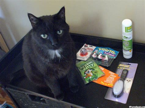 Kittens For Giveaway - poor kitty cats iams cat food giveaway winner prestonspeaks com