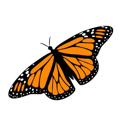 10 Free Adorable Animated Butterflies Colorful Butterfly Images Of Animated Butterflies