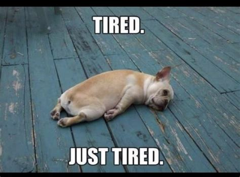 French Bulldog Meme - 25 best ideas about funny bulldog pictures on pinterest