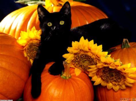 cat and pumpkin black cat on pumpkin wallpaper 16660 open walls