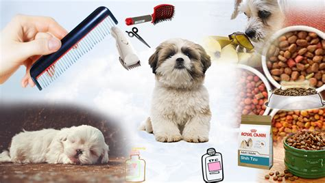 best clippers for shih tzu what are the best clippers for shih tzu dogs mogul