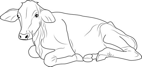 87 cow coloring pages free coloring pages free