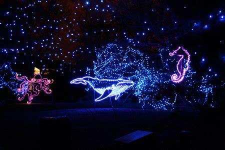 zoo lights near me magical seascape the of jen goode