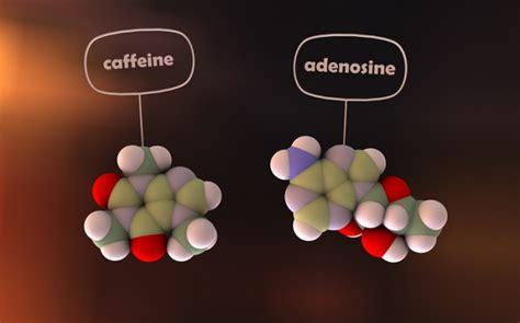 caffeina mal di testa cosa fa la caffeina al nostro cervello dissapore