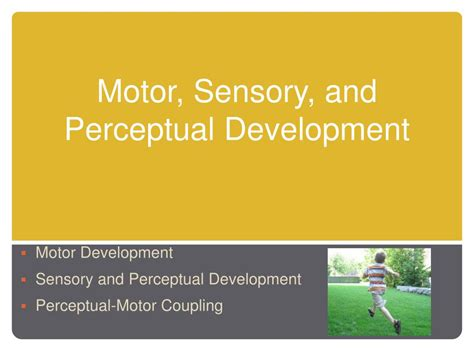 motor and sensory ppt motor sensory and perceptual development