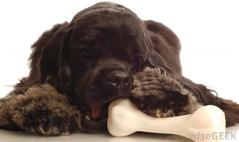 best bones for teething puppies how do i choose the best with picture