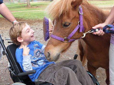 therapy programs equine therapy programs in pa domeutorrent