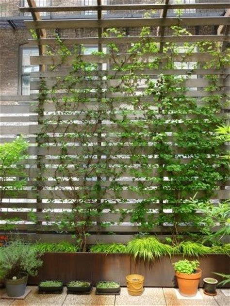 climbing plants for privacy climbing plants for terrace wall grow