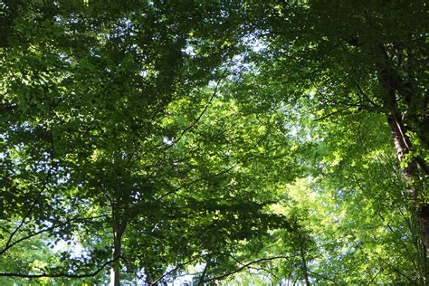 woodland forest plants and trees free images nature branch sun meadow sunlight leaf