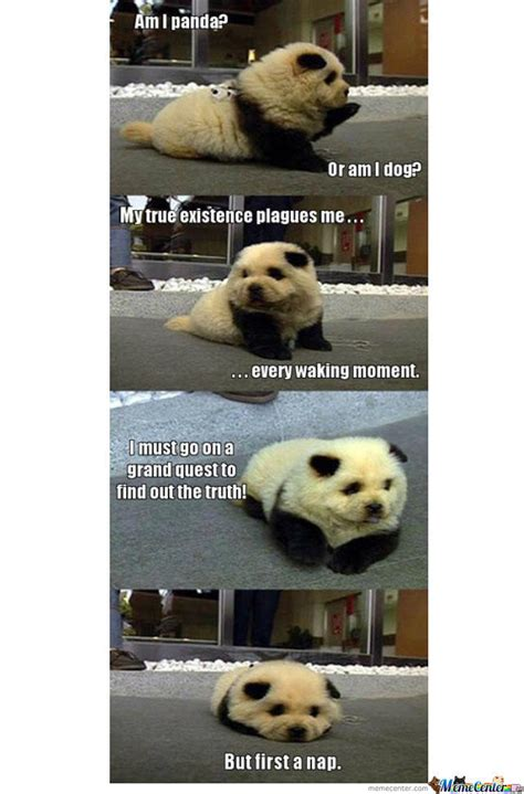 Cute Dog Memes - the cutest dog panda thing eva by hiroyuuy meme center