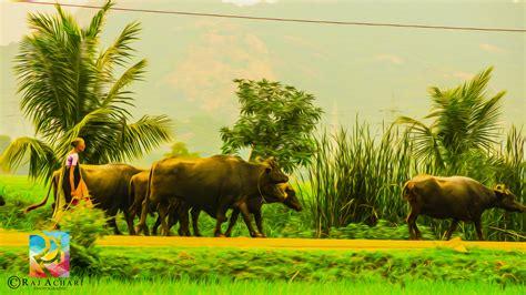 indian village wallpaper   wallpaperup