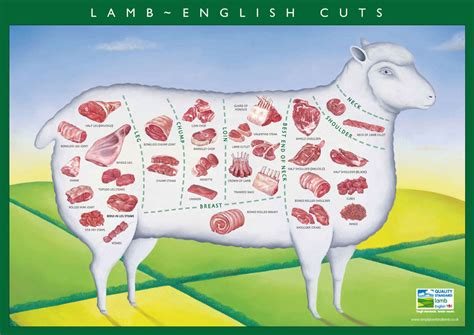 Lamp Shank by Cuts Of Lamb Guide From Morley Butchers Morley Butchers