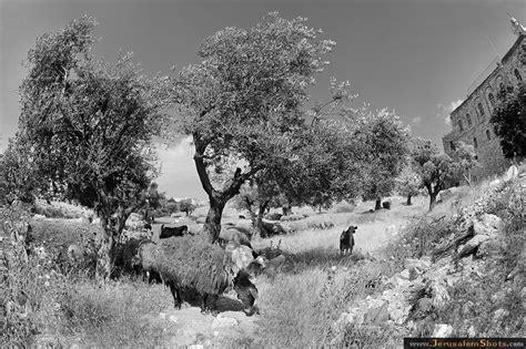 fotos de naturaleza en blanco y negro blog de fotograf 237 a jerusalem photographer misha burlatsky blanco y