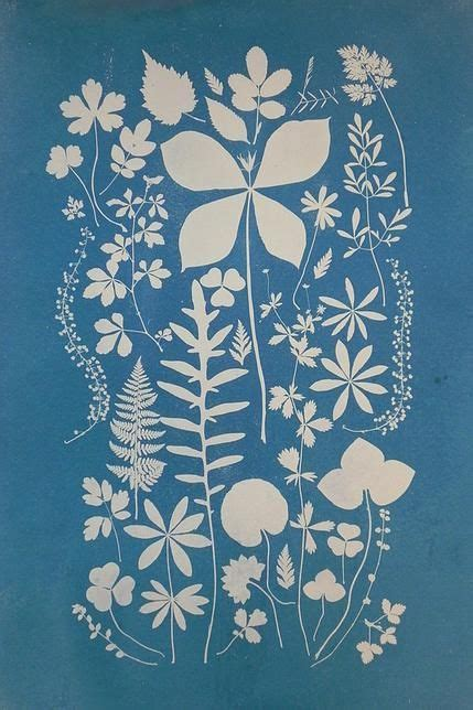 How To Make Cyanotype Paper - 17 best images about cyanotypes on paper