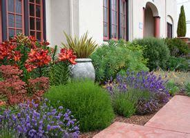 pini nani da giardino la ginestra piante da giardino caratteristiche ginestra