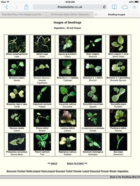 a guide to identifying your home d 233 cor style vegetable seedling identification chart http theseedsite