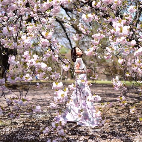 cherry blossom picture spots  scream insta goals