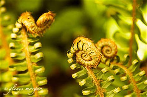 Stelan Next Flower the golden ratio ancient maths improves your photo