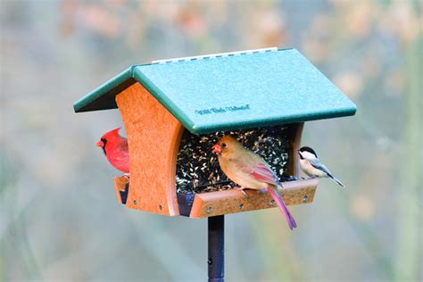 wild birds unlimited what seeds do wild birds eat