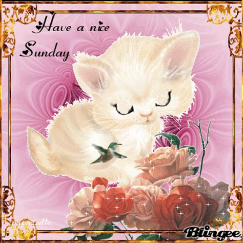 imagenes de good morning sister animated sunday quote pictures photos and images for