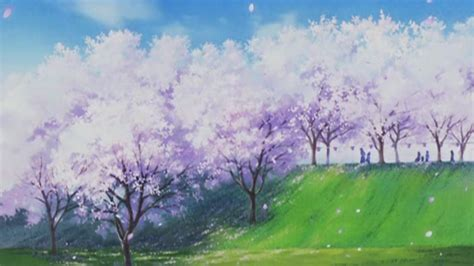 anime wallpapers and backgrounds anime cherry blossom wallpaper 72 images