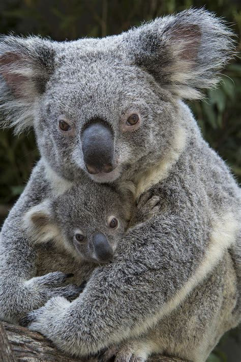 Animal moms and their babies by photographer Suzy Eszterhas