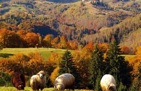 transilvania ro go tour viziteaza romania transilvania transilvania