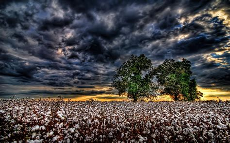 Cotton Wallpaper