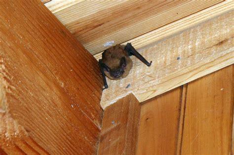 waterfowl natural unseen hazards blog