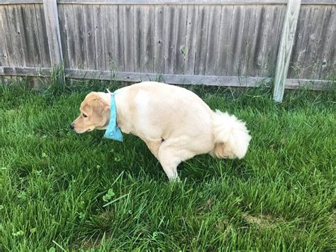 what to do with dog poop in backyard greening up your pet poop cleanup dogtime