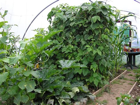 grow   vegetables sustainably  organic