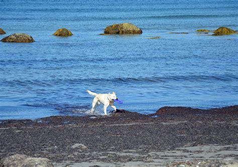 friendly beaches ri the 10 best beaches in rhode island