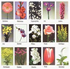 beautiful flowers names and pictures flowers names wallpapers beautiful flowers wallpapers