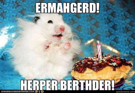 Ermahgerd Happy Birthday Meme - ermahgerd herper berthder ermahgerd birthday hamster