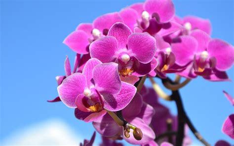 growing indoor orchids quiet corner