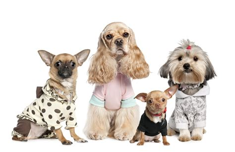 clothes for dogs tips to choose the best fashionable clothes