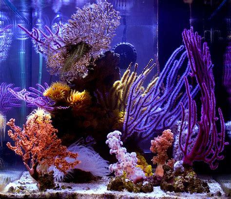 aquascape richmond 17 best ideas about nano aquarium on pinterest aquarium